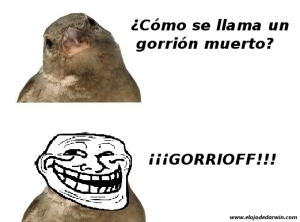 Chiste_gorrion